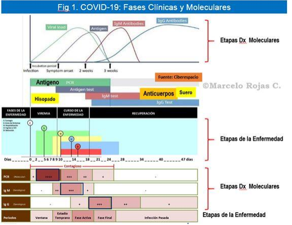 fases_clinicas_covid_19
